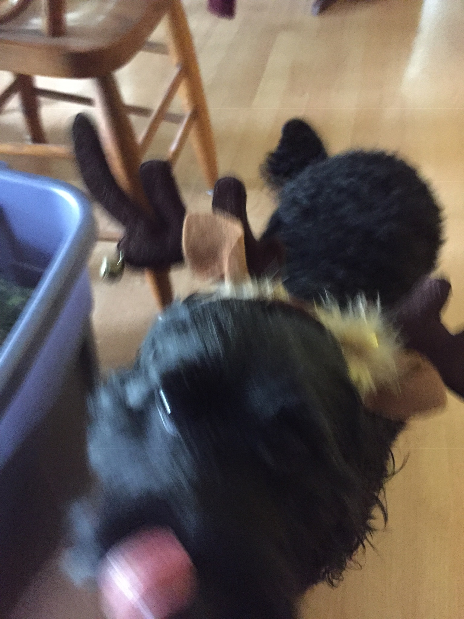 blurry photo of black dog with reindeer antlers on her head, licking her own nose